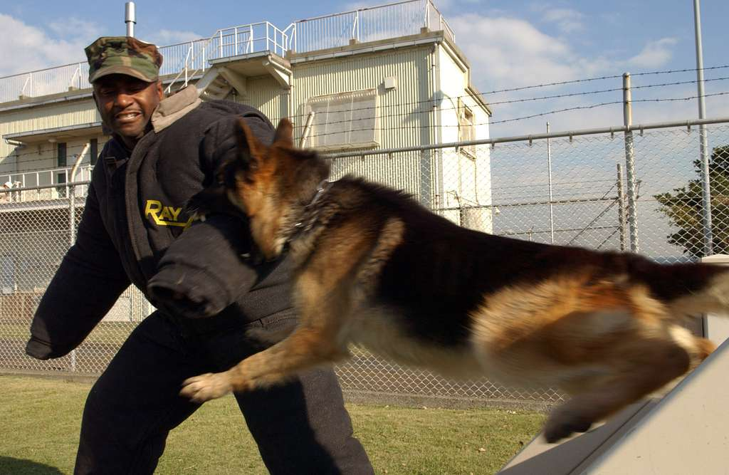 Master-at-Arms 2nd Class Linell Tarver of Montgomery, Ala., braces for impact from Jack President, a Military Working Dog (MWD) assigned to Commander Fleet Activities Yokosuka, during a bite exercise.