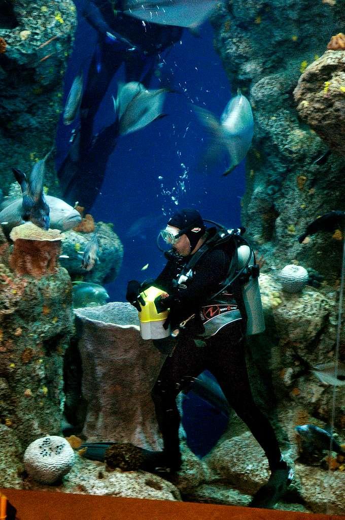 Hospital Corpsman 1st Class Terry Boroff feeds fish during a Navy Week event at the South Carolina Aquarium on Charleston Harbor.